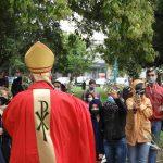 Del duro y seco madero de la cruz al verde olivo de la esperanza